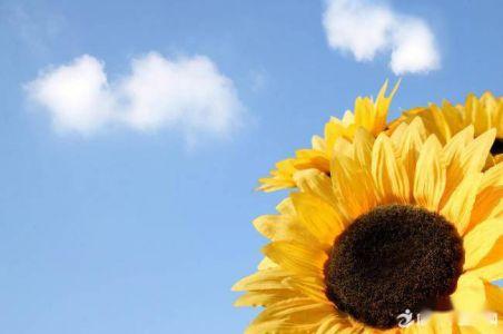 讀《光明、太陽花》有感400字